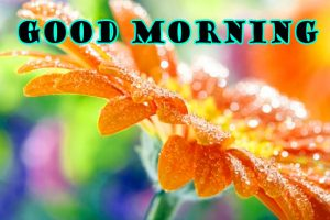 Latest Good Morning Wallpaper Pictures Free HD