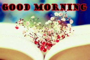 Latest Good Morning Images Pictures Photo Free Download