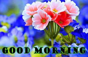 Latest Good Morning Images Photo Download