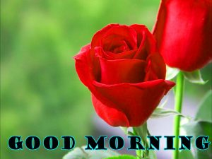 Latest Good Morning Pictures Images Photo Free Download