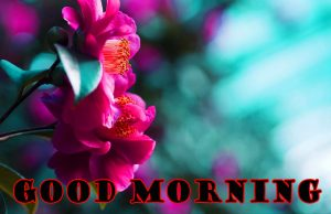 Latest Good Morning Images Pictures HD Download