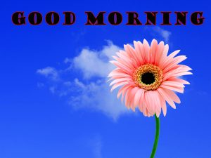 Latest Good Morning Photo Wallpaper Pictures HD
