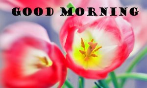 Latest Good Morning Wallpaper Pictures Images HD