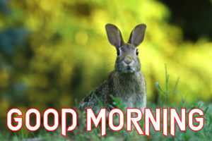 Animal Good Morning Images pictures photo hd download