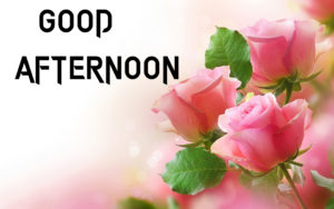 Beautiful Good Afternoon Images photo pics download