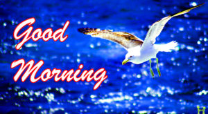 Beautiful Good Morning Images pictures photo hd download