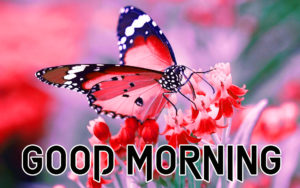 Butterfly Good Morning Wishes Images pictures photo hd download
