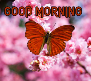 Butterfly Good Morning Wishes Images pictures photo download