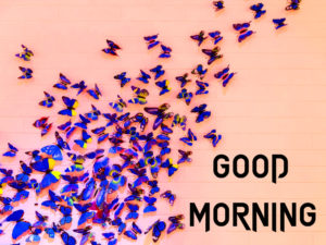Butterfly Good Morning Wishes Images wallpaper pictures hd