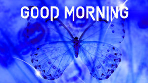 Butterfly Good Morning Wishes Images photo pictures free download