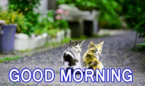Cute Good Morning Images Pictures Pics Photo Free HD Download