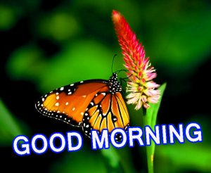 Cute Good Morning Wallpaper Pics Pictures Images Free Download
