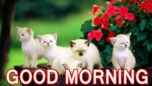 Cute Good Morning Wallpaper Pics Pictures Photo Download