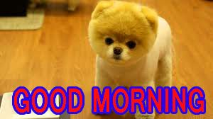 Cute Good Morning Wallpaper Pics Pictures Free HD