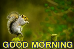 Cute Good Morning Images Wallpaper Pictures Photo Download HD