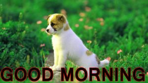 Cute Good Morning Images Pictures Pics Photo HD