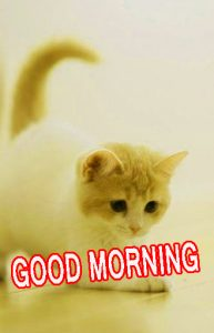 Cute Good Morning Images Pictures Pics Free HD