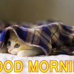 Cute Good Morning Images HD , Cute Good Morning Wallpaper , Lover good Morning Pics