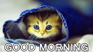 Cute Good Morning Images Pictures Pics Wallpaper Free HD