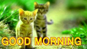 Cute Good Morning Images Pictures Pics Download For Facebook