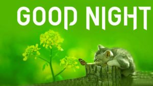 Cute Good Night Images wallpaper photo hd
