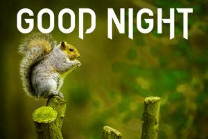 Cute Good Night Images wallpaper photo download