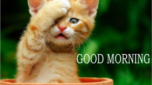 Funny Good Morning Images Photo Wallpaper Pictures Download