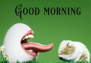 Funny Good Morning Images Wallpaper Pictures Pics Free Download