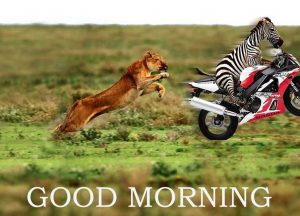 Funny Good Morning Images Photo Wallpaper Download