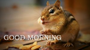 Funny Good Morning Images Wallpaper Pictures Pics Free HD