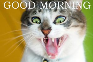 Funny Good Morning Images Wallpaper Pictures Pics HD