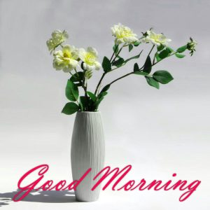 New Good Morning Images Full HD Collection HD Download