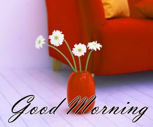 New Good Morning Images Full HD Collection Pictures Photo HD
