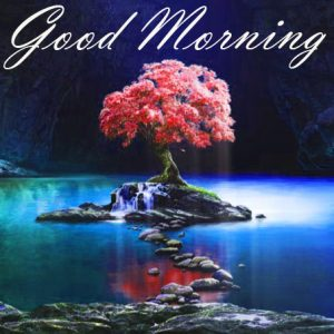 New Good Morning Images Full HD Collection Photo Pictures Free Download