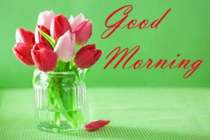 New Good Morning Images Full HD Collection Wallpaper Pictures Free HD