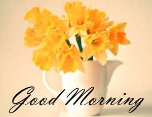 New Good Morning Images Full HD Collection Wallpaper Pics Photo HD Download