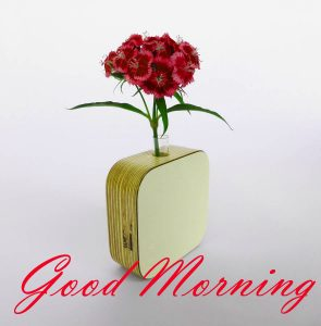 New Good Morning Images Full HD Collection Photo Pictures Download