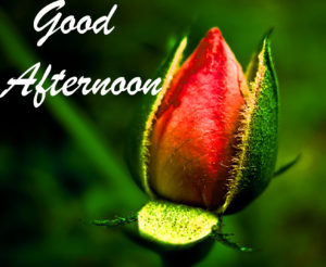 Good Afternoon Images pictures wallpaper hd