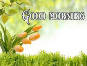Good Morning Greetings images Wallpaper Pictures Download