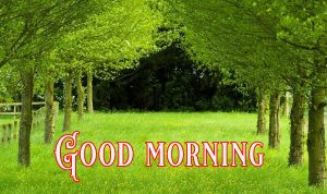 Good Morning Greetings images Wallpaper Photo Pics HD Download