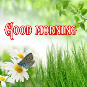 Good Morning Greetings images Pictures Photo Wallpaper HD Download