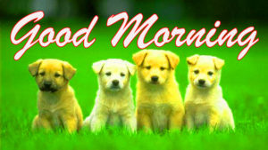 puppy good morning images pictures photo hd download