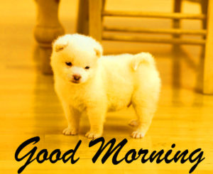 puppy good morning images wallpaper photo hd
