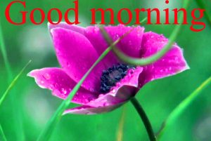 Very Nice Special Good Morning Images Pictures Pics Photo HD Download