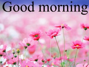 Very Nice Special Good Morning Images Pictures Pics Photo HD