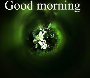 Very Nice Special Good Morning Images Photo Wallpaper Download