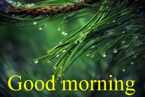 Very Nice Special Good Morning Images Pictures Pics Free Download