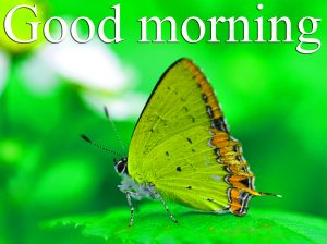 Very Nice Special Good Morning Images Pictures Pics Free HD Download