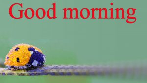 Very Nice Special Good Morning Images Pictures Photo Download
