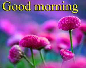 Very Nice Special Good Morning Images Pictures Pics Photo Free HD
